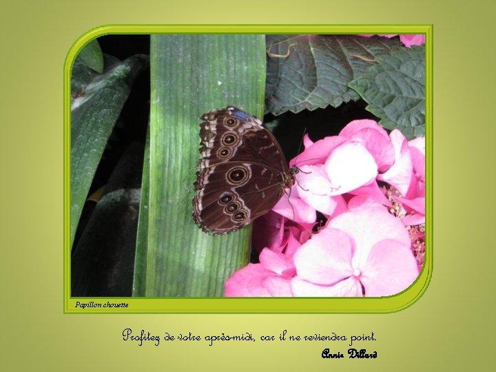 Papillon chouette Profitez de votre après-midi, car il ne reviendra point. Annie Dillard