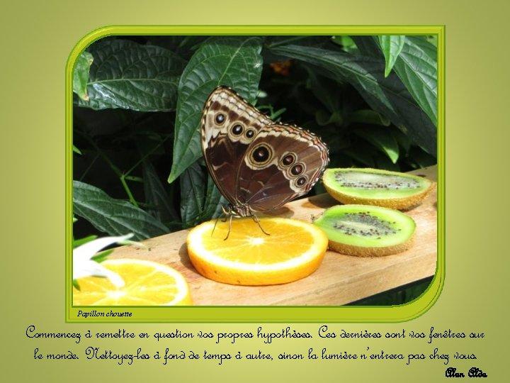 Papillon chouette Commencez à remettre en question vos propres hypothèses. Ces dernières sont vos