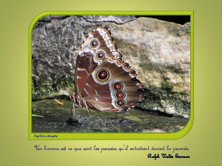 Papillon chouette Un homme est ce que sont les pensées qu'il entretient durant la