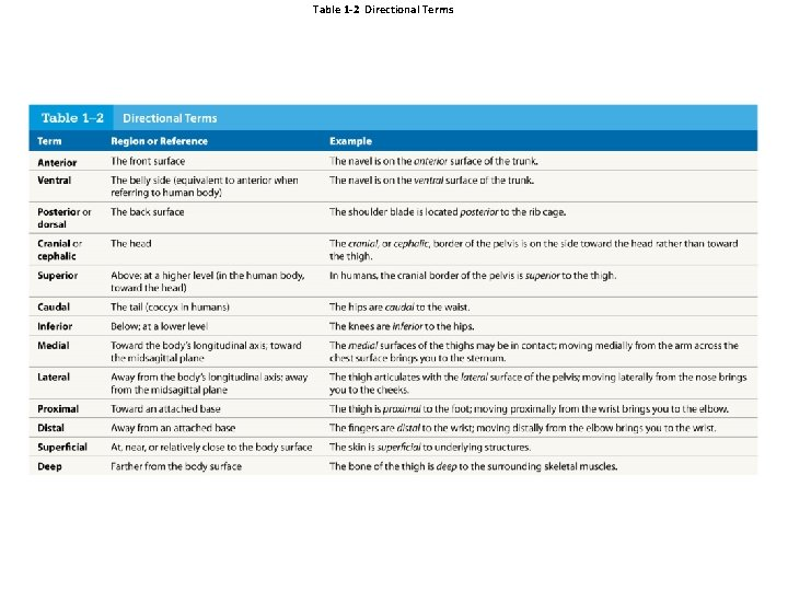 Table 1 -2 Directional Terms