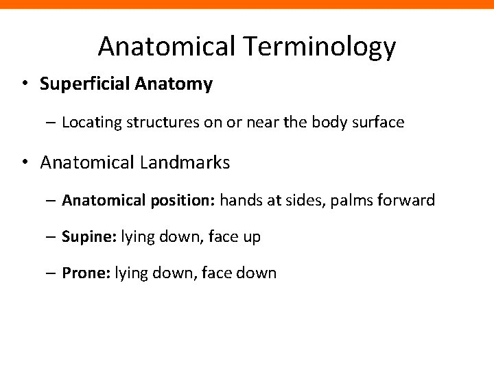 Anatomical Terminology • Superficial Anatomy – Locating structures on or near the body surface