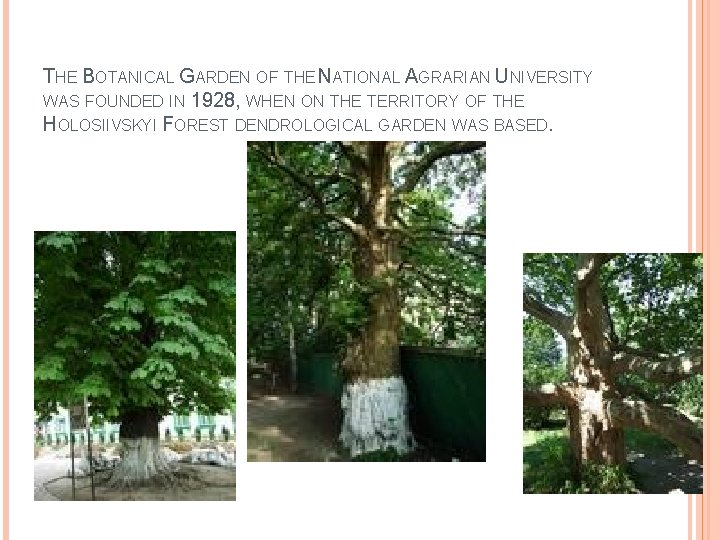 THE BOTANICAL GARDEN OF THE NATIONAL AGRARIAN UNIVERSITY WAS FOUNDED IN 1928, WHEN ON