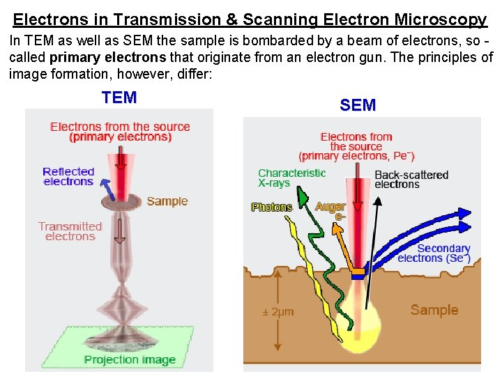 Electrons in Transmission & Scanning Electron Microscopy In TEM as well as SEM the