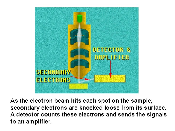 As the electron beam hits each spot on the sample, secondary electrons are knocked