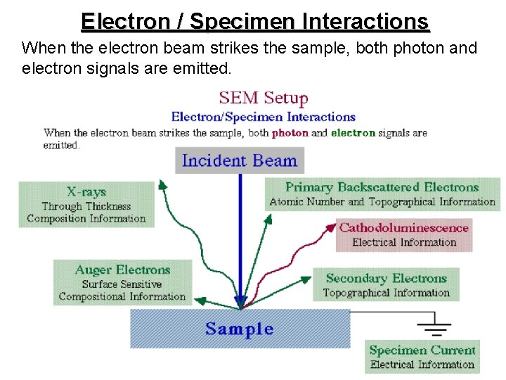Electron / Specimen Interactions When the electron beam strikes the sample, both photon and