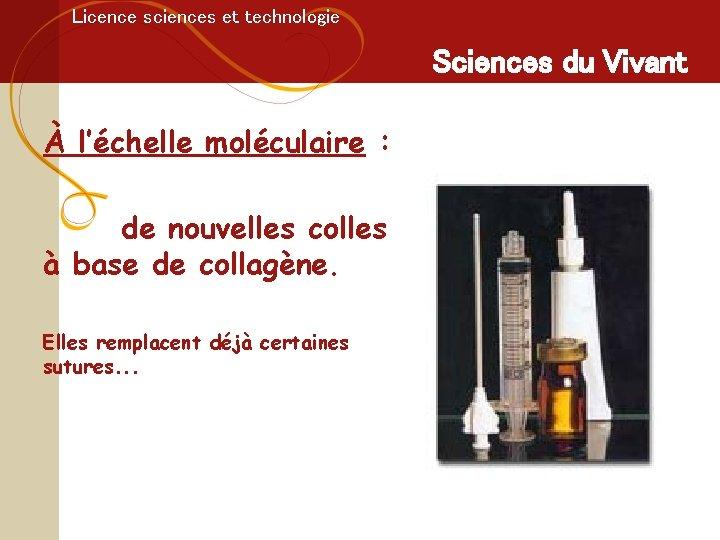 Licence sciences et technologie Sciences du Vivant À l'échelle moléculaire : de nouvelles colles
