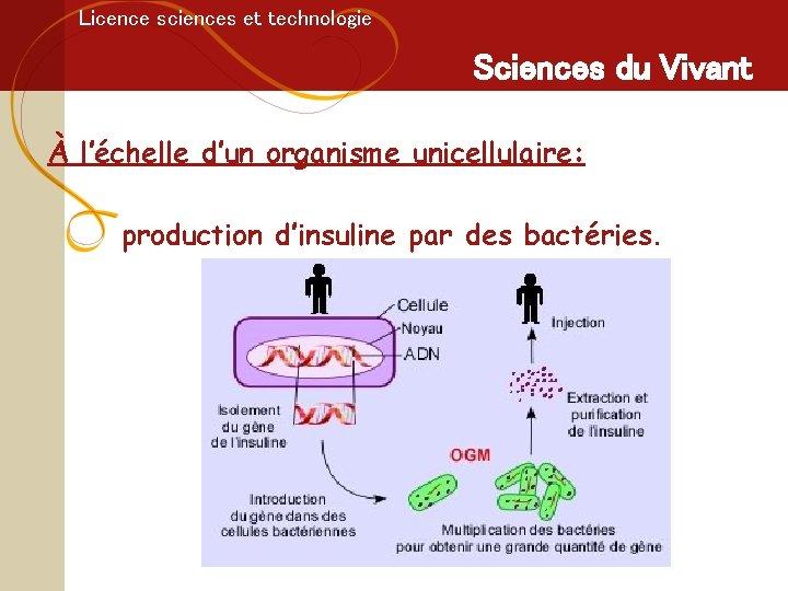 Licence sciences et technologie Sciences du Vivant À l'échelle d'un organisme unicellulaire: production d'insuline