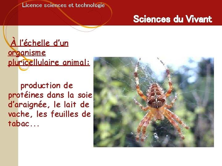 Licence sciences et technologie Sciences du Vivant À l'échelle d'un organisme pluricellulaire animal: production