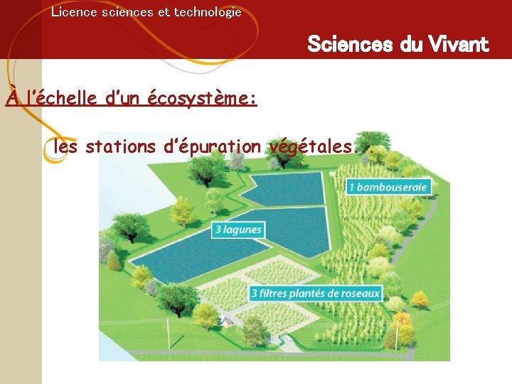 Licence sciences et technologie Sciences du Vivant À l'échelle d'un écosystème: les stations d'épuration