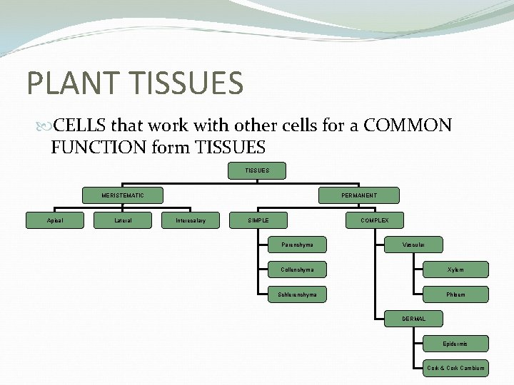 PLANT TISSUES CELLS that work with other cells for a COMMON FUNCTION form TISSUES