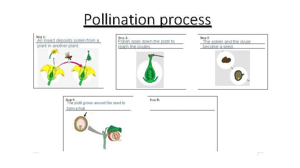 Pollination process An insect deposits pollen from a plant in another plant. Pollen goes