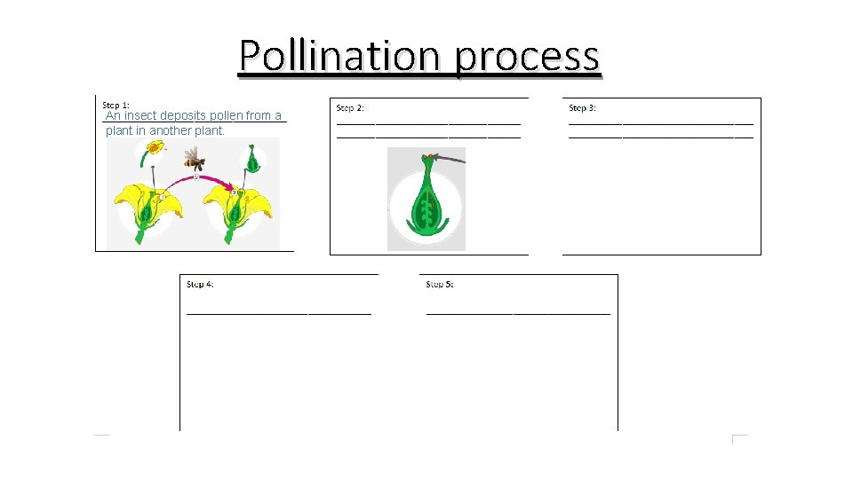 Pollination process An insect deposits pollen from a plant in another plant.