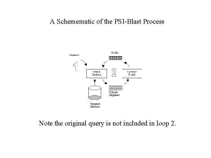A Schemematic of the PSI-Blast Process Note the original query is not included in