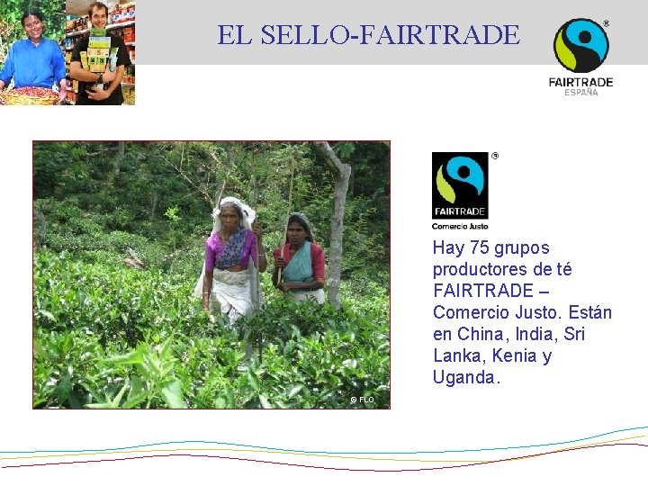 EL SELLO-FAIRTRADE Hay 75 grupos productores de té FAIRTRADE – Comercio Justo. Están en