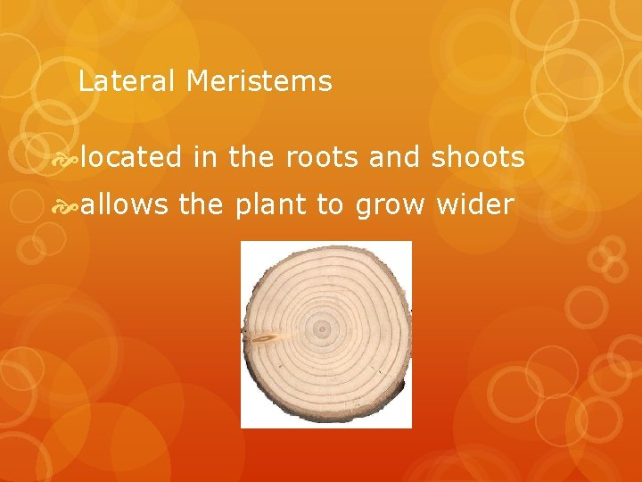 Lateral Meristems located in the roots and shoots allows the plant to grow wider