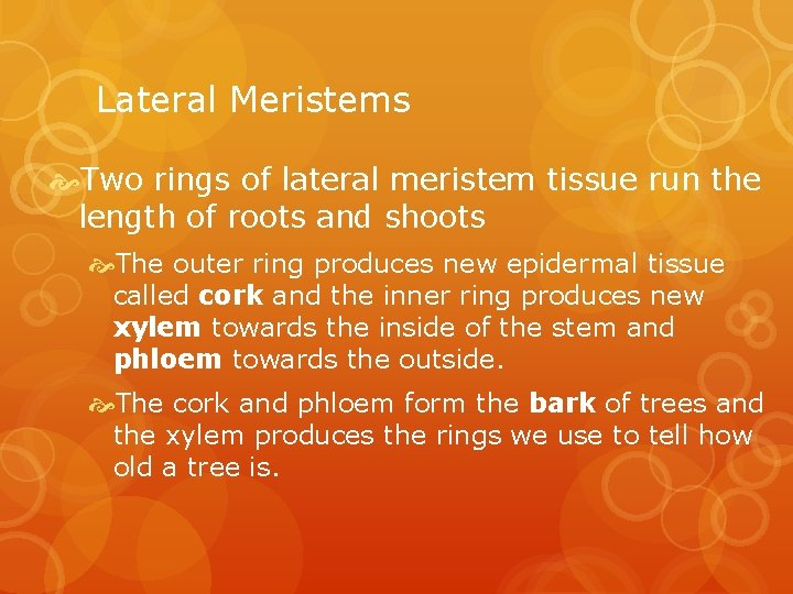 Lateral Meristems Two rings of lateral meristem tissue run the length of roots and