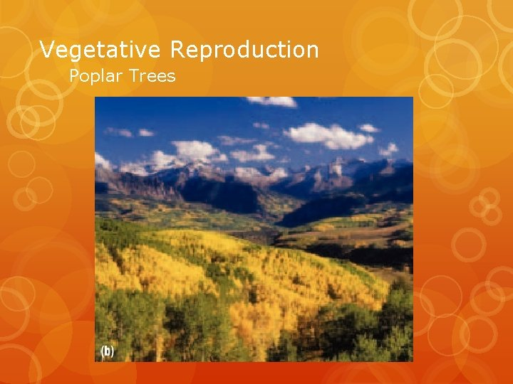 Vegetative Reproduction Poplar Trees