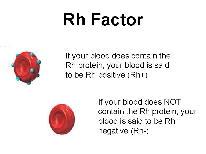 Rh Factor If your blood does contain the Rh protein, your blood is said