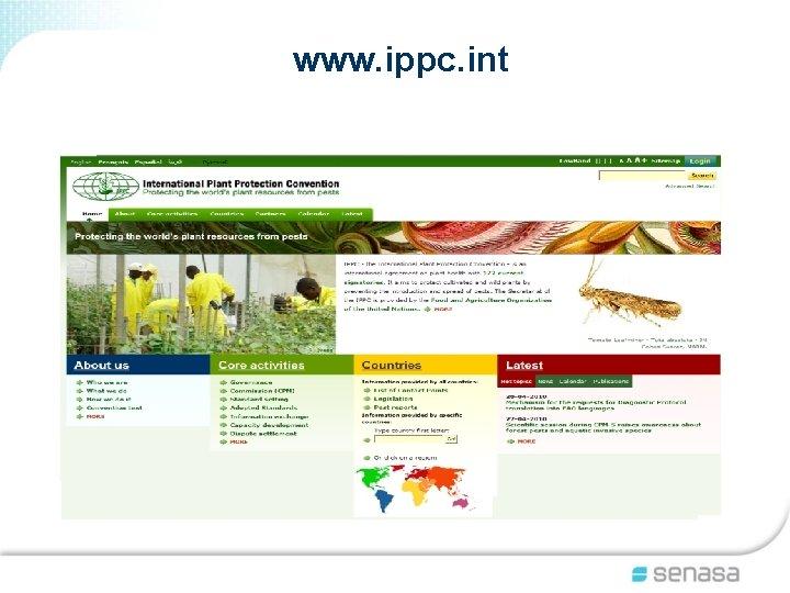 www. ippc. int