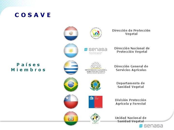 COSAVE Dirección de Protección Vegetal Dirección Nacional de Protección Vegetal Países Miembros Dirección General