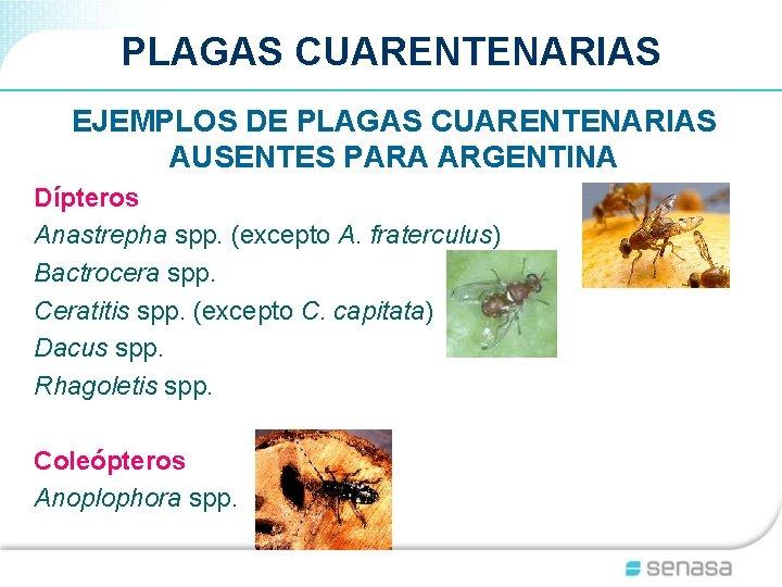 PLAGAS CUARENTENARIAS EJEMPLOS DE PLAGAS CUARENTENARIAS AUSENTES PARA ARGENTINA Dípteros Anastrepha spp. (excepto A.