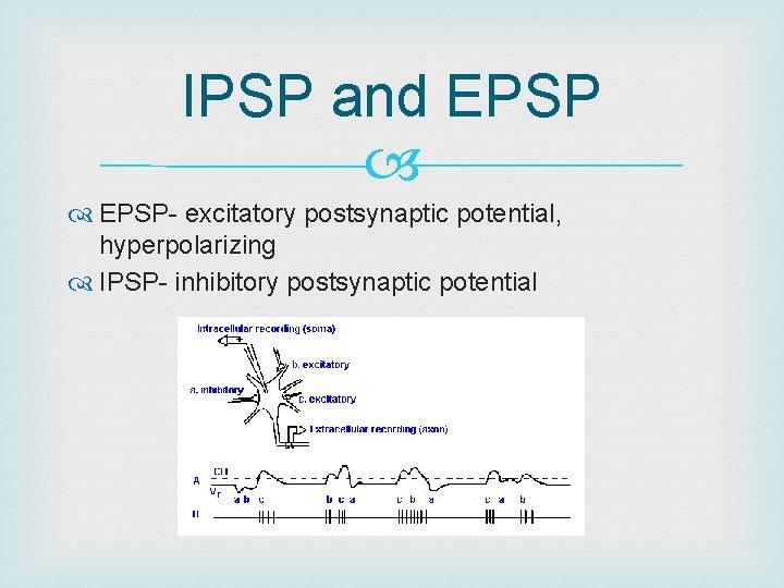 IPSP and EPSP- excitatory postsynaptic potential, hyperpolarizing IPSP- inhibitory postsynaptic potential