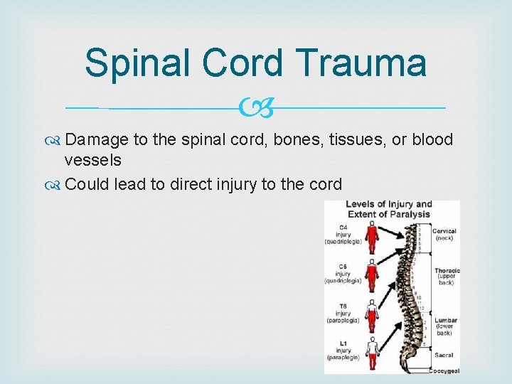 Spinal Cord Trauma Damage to the spinal cord, bones, tissues, or blood vessels Could