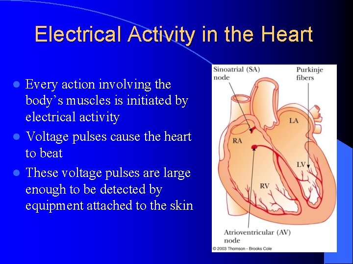Electrical Activity in the Heart Every action involving the body's muscles is initiated by