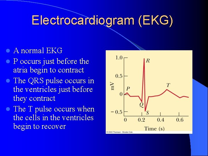 Electrocardiogram (EKG) A normal EKG l P occurs just before the atria begin to