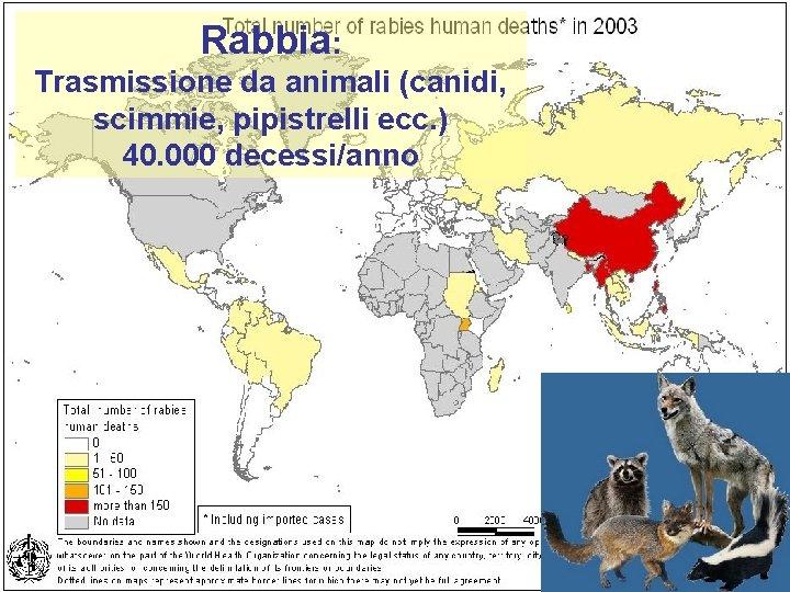 Rabbia: Trasmissione da animali (canidi, scimmie, pipistrelli ecc. ) 40. 000 decessi/anno 38
