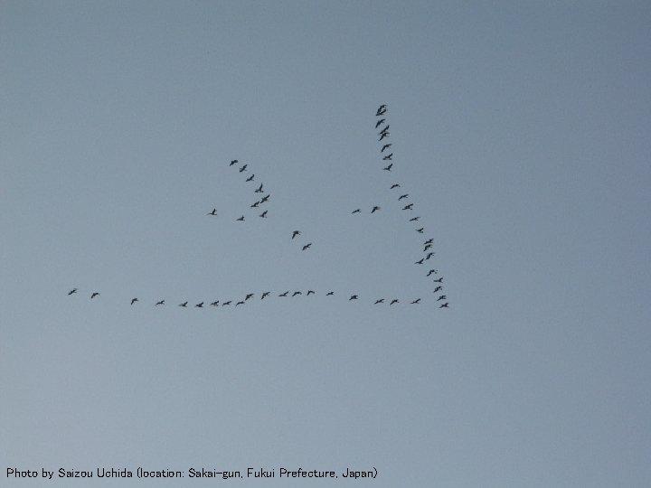 Flying Geese 2 Photo by Saizou Uchida (location: Sakai-gun, Fukui Prefecture, Japan)