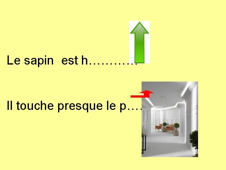 Le sapin est h………… Il touche presque le p………. .