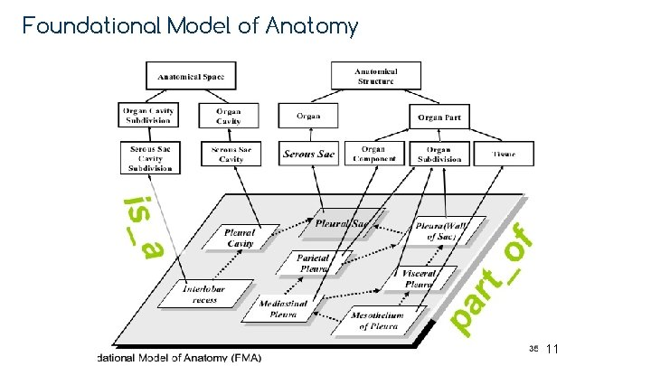 Foundational Model of Anatomy 11