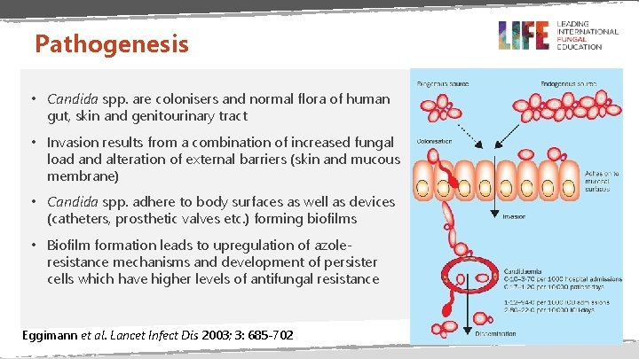 Pathogenesis • Candida spp. are colonisers and normal flora of human gut, skin and