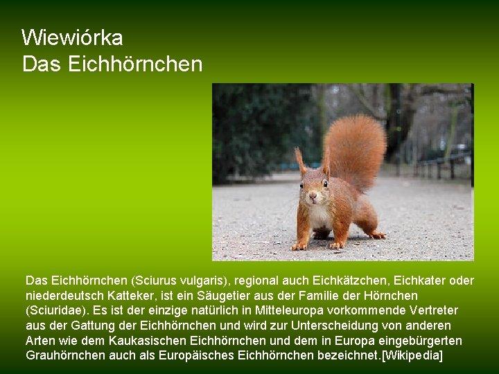 Wiewiórka Das Eichhörnchen (Sciurus vulgaris), regional auch Eichkätzchen, Eichkater oder niederdeutsch Katteker, ist ein