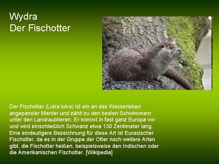 Wydra Der Fischotter (Lutra lutra) ist ein an das Wasserleben angepasster Marder und zählt