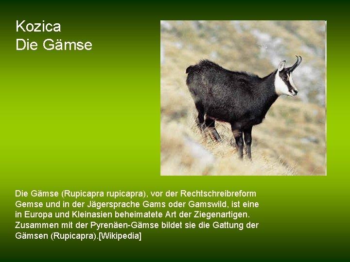 Kozica Die Gämse (Rupicapra rupicapra), vor der Rechtschreibreform Gemse und in der Jägersprache Gams