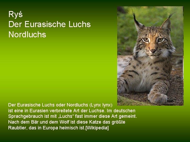 Ryś Der Eurasische Luchs Nordluchs Der Eurasische Luchs oder Nordluchs (Lynx lynx) ist eine