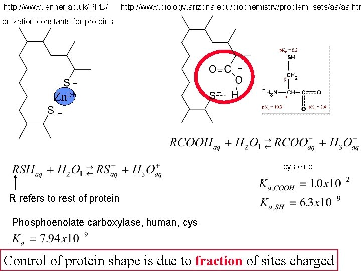 http: //www. jenner. ac. uk/PPD/ http: //www. biology. arizona. edu/biochemistry/problem_sets/aa/aa. htm Ionization constants for