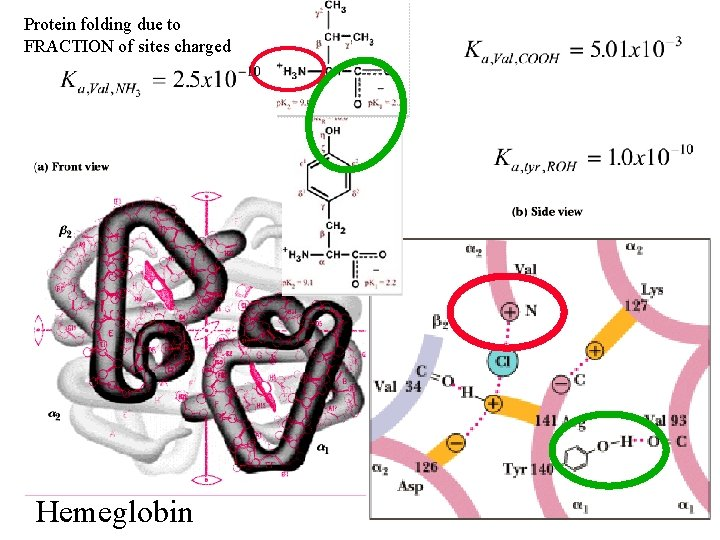 Protein folding due to FRACTION of sites charged Hemeglobin