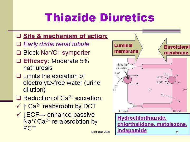 Thiazide Diuretics q Site & mechanism of action: q Early distal renal tubule q