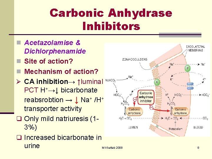 Carbonic Anhydrase Inhibitors n Acetazolamise & n n Ø q q Dichlorphenamide Site of