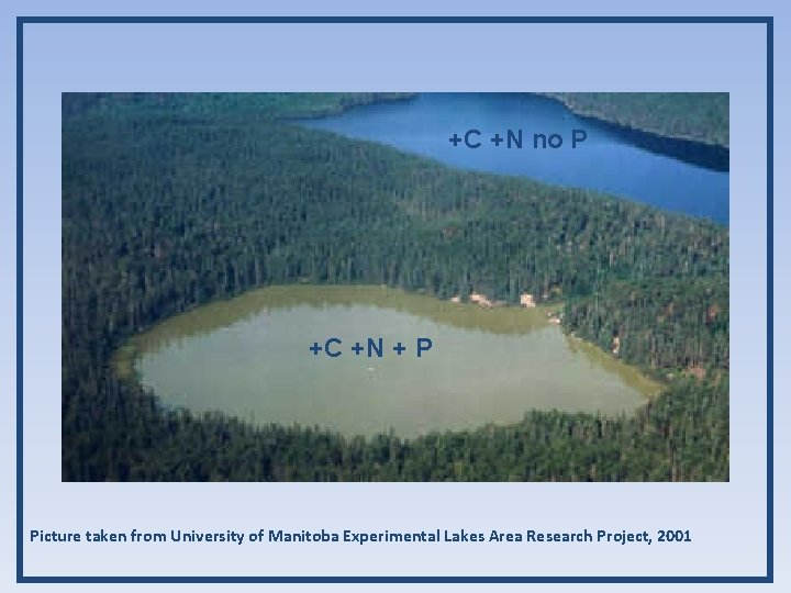 +C +N no P +C +N + P Picture taken from University of Manitoba