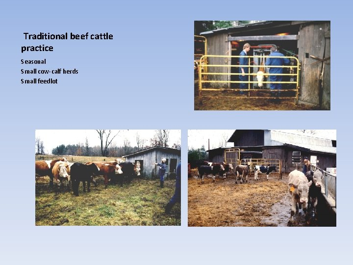 Traditional beef cattle practice Seasonal Small cow-calf herds Small feedlot