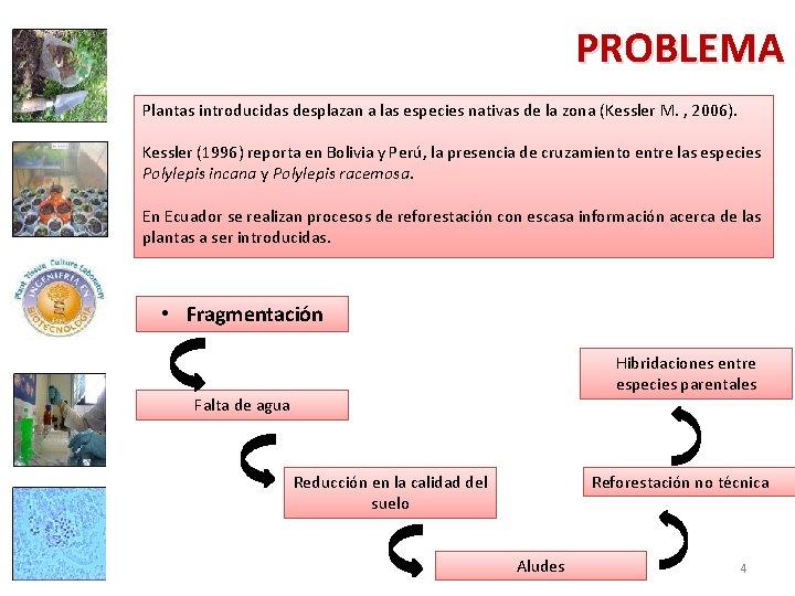 PROBLEMA Plantas introducidas desplazan a las especies nativas de la zona (Kessler M. ,