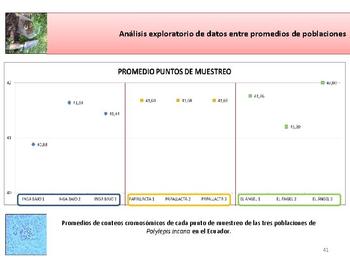 Análisis exploratorio de datos entre promedios de poblaciones Promedios de conteos cromosómicos de cada