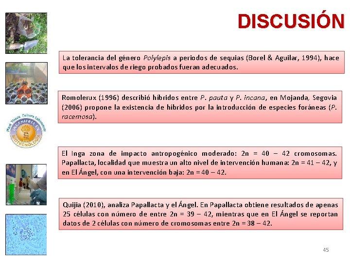 DISCUSIÓN La tolerancia del género Polylepis a periodos de sequias (Borel & Aguilar, 1994),