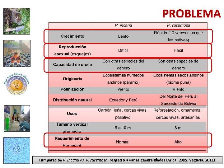 PROBLEMA 6 Comparación P. incana vs. P. racemosa, respecto a varias generalidades (Arica, 2005;