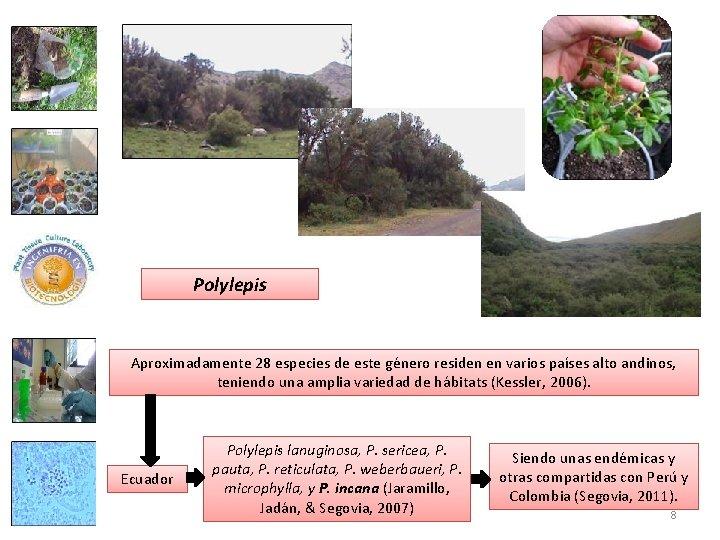 Polylepis Aproximadamente 28 especies de este género residen en varios países alto andinos, teniendo