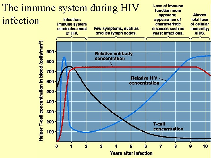 The immune system during HIV infection